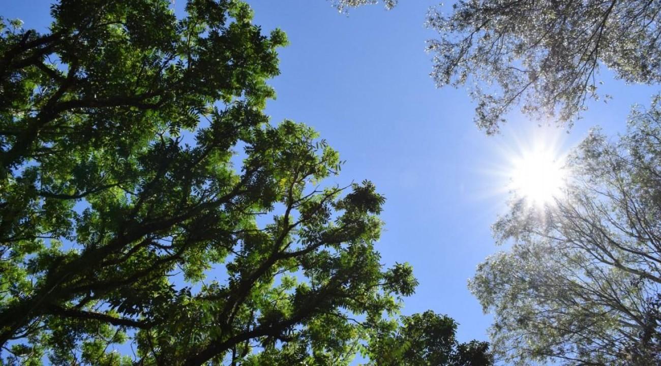 Agosto começa com temperaturas em elevação e tempo seco.