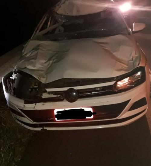 Motorista fica ferido após acidente com cavalo no Oeste de SC.