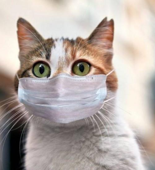 Gato doméstico é confirmado com Covid-19 no Brasil.