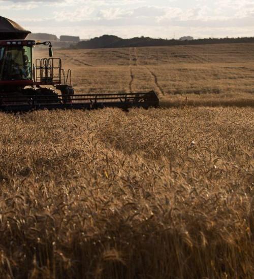 Contratação de crédito rural sobe 18% em relação ao último semestre de 2019.