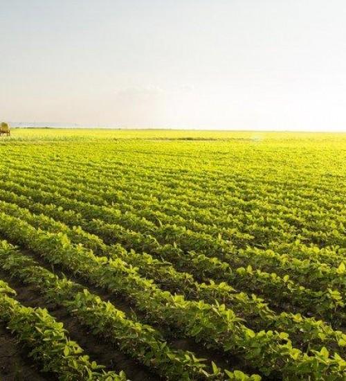 Exportações do agronegócio gaúcho registram alta de 42% no segundo trimestre de 2021.